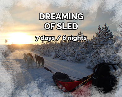 Stay : Dreaming of sled